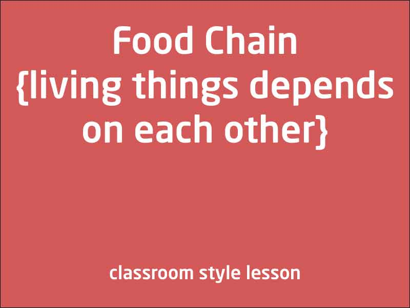 SubjectCoach | Food chain