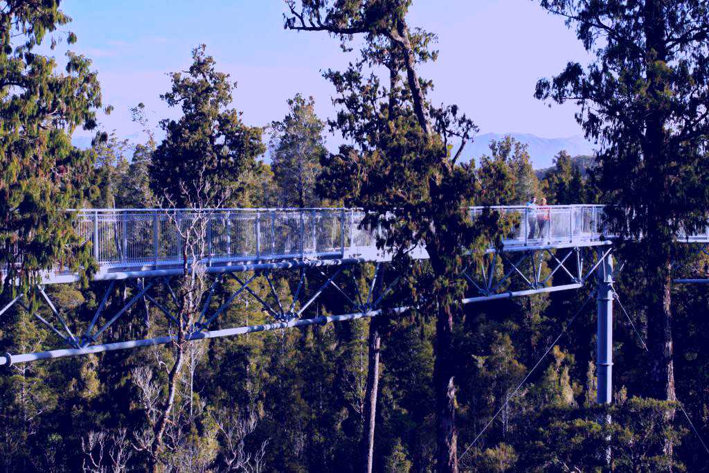 SubjectCoach | West Coast Tree Top Walk