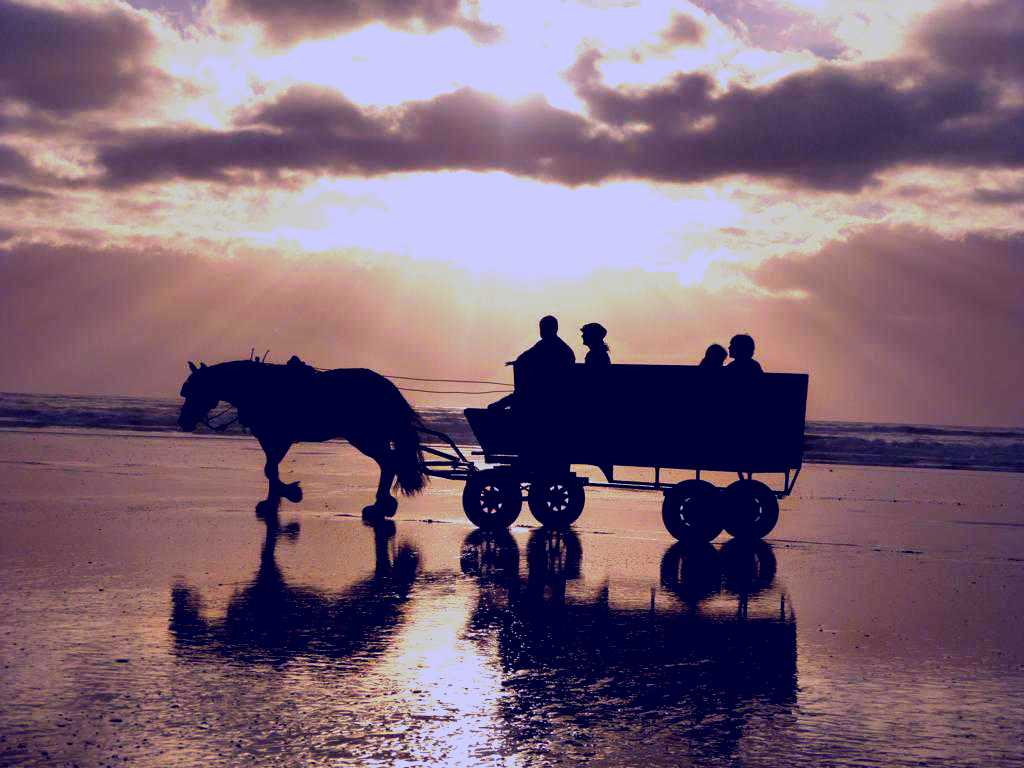 SubjectCoach | Golden Sands Horse and Wagon Tours
